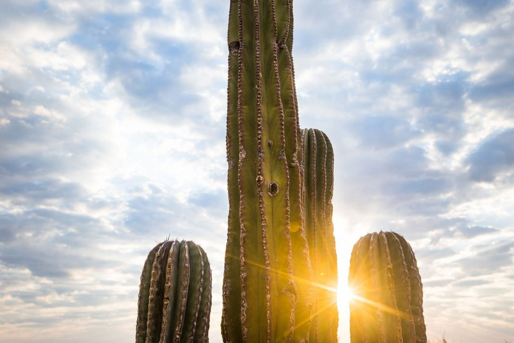 Cactus and sunset at our boutique hotel in Mexico - Casa Tara Retreat