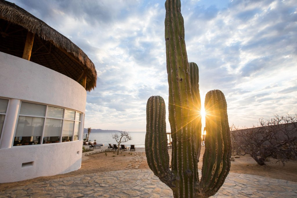 Sunset behind a cactus and our boutique hotel in Mexico - Casa Tara Retreat